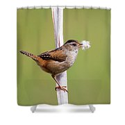 Marsh Wren Nest Building Shower Curtain