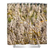 Marshes 3 Shower Curtain