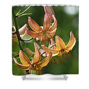 Martagon Lily Shower Curtain