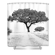 Marula Tree Shower Curtain