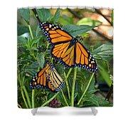 Marvelous Monarchs Shower Curtain