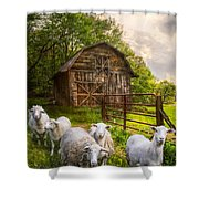 Mary Had A Little Lamb Shower Curtain