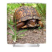 Maryland Box Turtle Shower Curtain