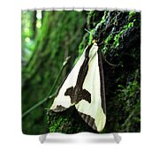 Maryland Clymene Moth Shower Curtain