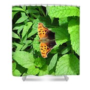 Maryland Eastern Comma Shower Curtain