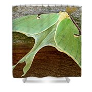 Maryland Luna Moth Shower Curtain
