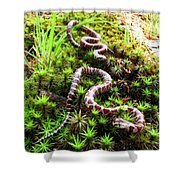 Maryland Milk Snakes Verticle Shower Curtain