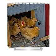 Aunt Mary's Chickens Shower Curtain
