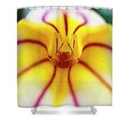 Masdevallia Orchid Shower Curtain