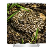 Massasauga Rattlesnake Shower Curtain