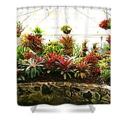 Massed Bromeliad In Hothouse Shower Curtain