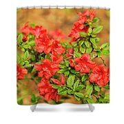 Masses Of Azaleas Shower Curtain