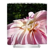 Master Gardener Pink Dahlia Flower Garden Art Prints Canvas Baslee Troutman Shower Curtain