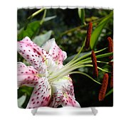 Master Gardeners Art Floral Pink Lily Flower Baslee Troutman Shower Curtain