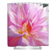 Master Gardeners Pink Dahlias Art Prints Baslee Troutman Shower Curtain