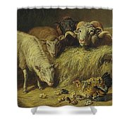 Maternal Solicitude By Arthur Fitzwilliam Tait Shower Curtain