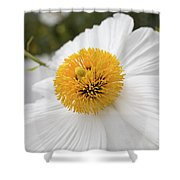 Matillija Poppy Shower Curtain