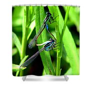 Mating Damselflies Shower Curtain