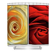 Matters Of The Heart - Diptych Shower Curtain