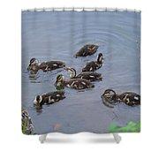 Maturing Ducklings Shower Curtain