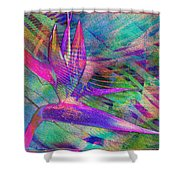 Maui Bird Of Paradise Shower Curtain