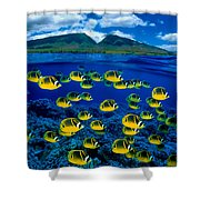 Maui Butterflyfish Shower Curtain by Dave Fleetham - Printscapes