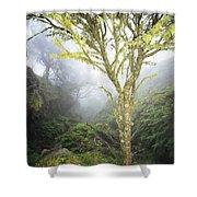Maui Moss Tree Shower Curtain