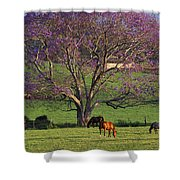 Maui, Upcountry Shower Curtain