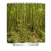 Maui's Thick Bamboo Shower Curtain