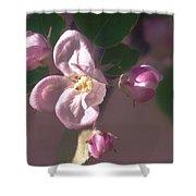 Mauve Blossom Shower Curtain