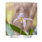 Mauve Trout Lily Shower Curtain