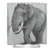 Maximus Shower Curtain