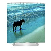 Maxwell On The Beach Shower Curtain