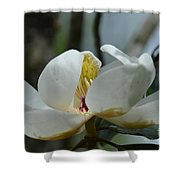 May Magnolia 2 Shower Curtain