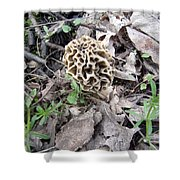 May Morel Mushroom Shower Curtain