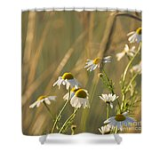 Mayweed Shower Curtain