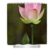 Pink Lotus And A Bud Shower Curtain