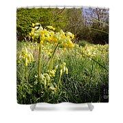 Meadow Cowslip Shower Curtain