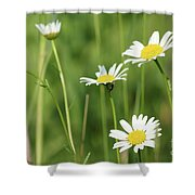 Meadow Detail White Wild Flowers Shower Curtain