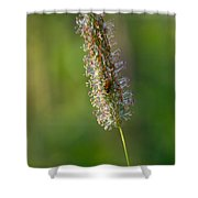 Meadow Foxtail Shower Curtain
