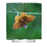 Meadow Fritillary Butterfly 2015 Shower Curtain