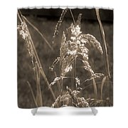 Meadow Grass In Sepia Shower Curtain