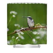 Meadow Hummingbird Shower Curtain