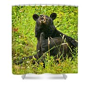 Meadow Itch Bear Shower Curtain