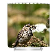 Meadow Pipit With Food Shower Curtain