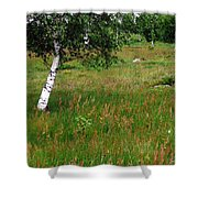 Meadow With Birch Trees Shower Curtain