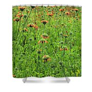 Meadow With Orange Wildflowers Shower Curtain