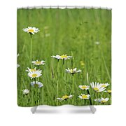 Meadow With White Wild Flowers Spring Scene Shower Curtain