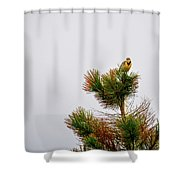 Meadowlark - 1 Shower Curtain