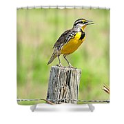 Meadowlark 7 Shower Curtain
